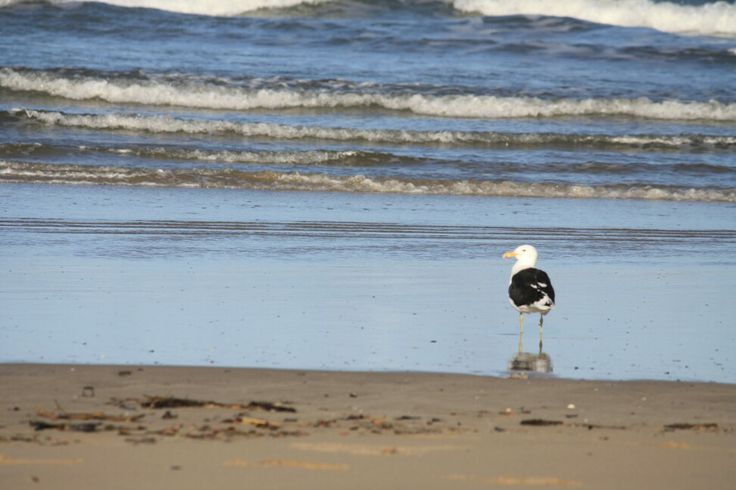 Gonubie beach