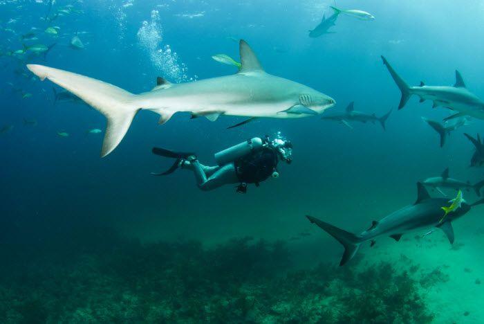 Nadar tubarões na África