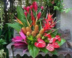 Resultado de imagen para flores exoticas del mundo