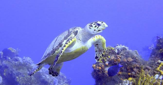 SAS software can be used for many things: Here's how you could use it to help save endangered sea turtles!