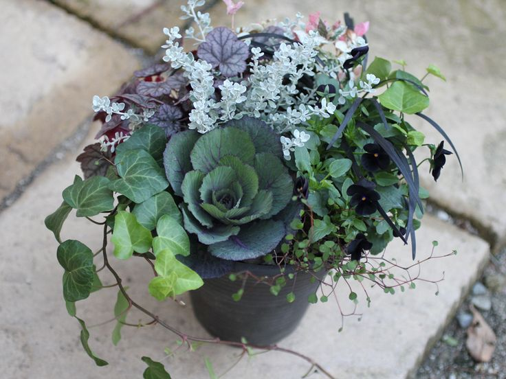 ブラック系の植物で、シックな寄せ植えを作りました。