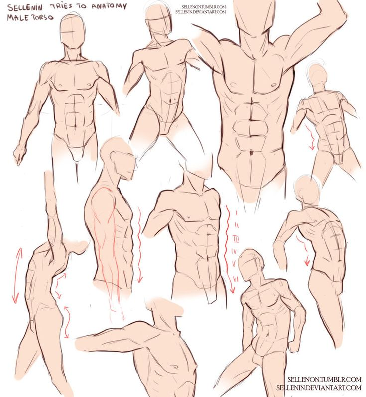 Male Torso Practice by Sellenin on DeviantArt