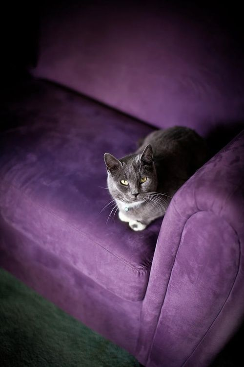 Grey and purple always go together even when the grey is a cat.
