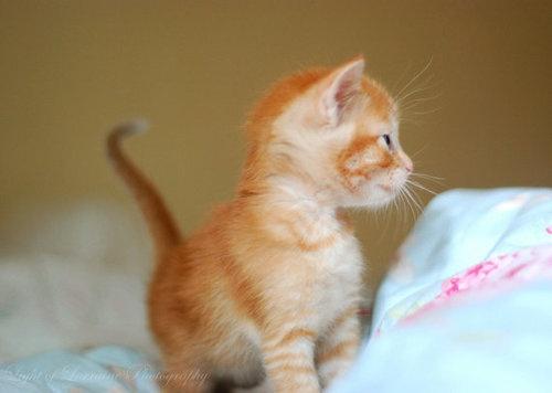 Orange.: The Cats, 31 Photos, Cat Stuff, Daily Awww, Awws 31, Animal
