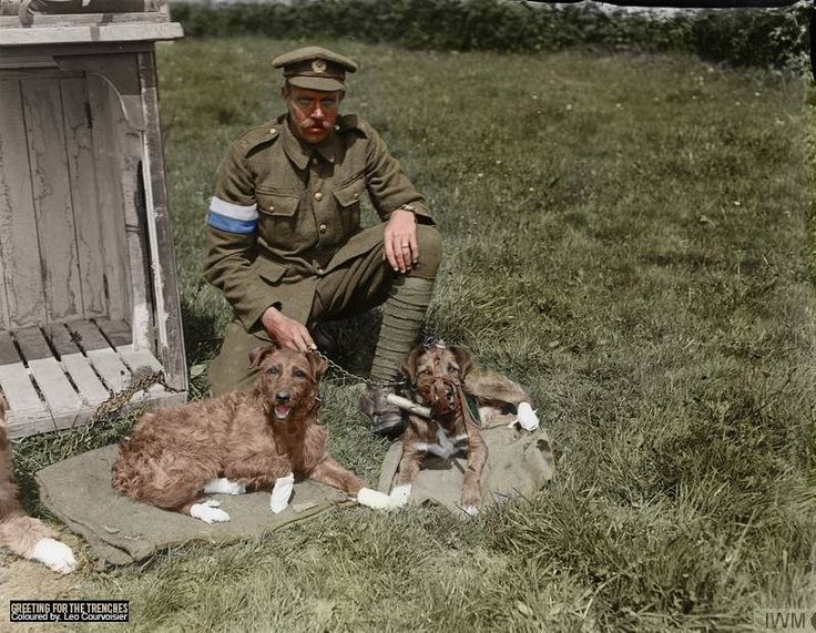 Dog handler of the Royal Engineers (Signals) with his messenger dogs at a Army Veterinary Corps HQ Kennel near Nieppe Wood, 19 May 1918. Note the dogs feet, bandaged as a result of injuries caused by mustard gas. (Source © IWM Q 10965) (Photographer - Second Lieutenant Thomas Keith Aitken) Colorised by Leo Courvoisier https://www.facebook.com/pages/Greetings-from-the-trenches/830845900362286?fref=nf