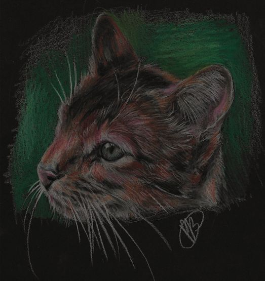 Warrior Cats A Vision Of Shadows Book 1: 1000+ Images About Warrior Cats On Pinterest