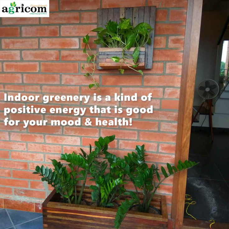 contact us for your indooroutdoor garden design and maintenance in kochi kerala
