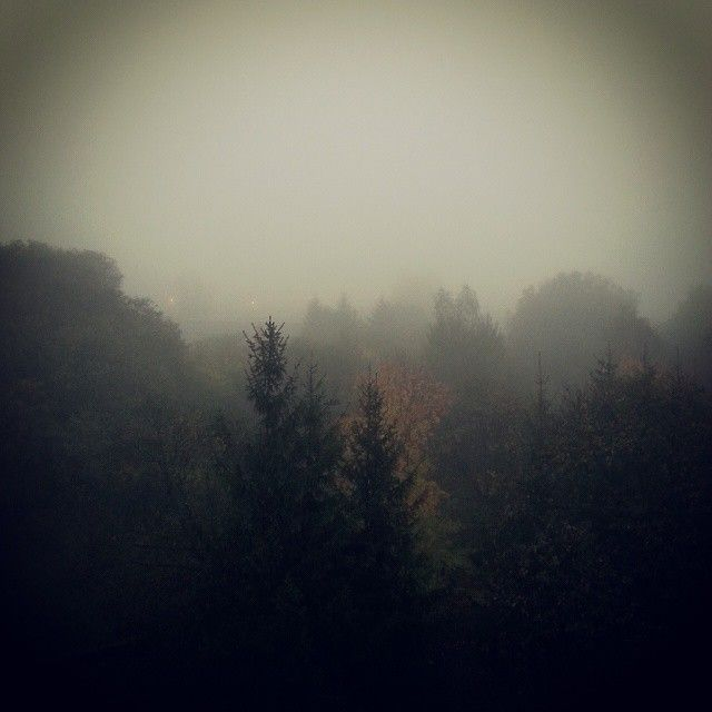 Pracowe okno #mist #autumn #fall #szczecin #poland | Use Instagram online! Websta is the Best Instagram Web Viewer!
