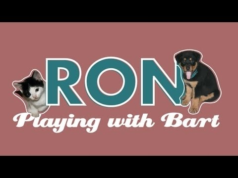 Part one Hi, I´m a puppy Rottweiler and this is a short about me playing with one of my two Kitten  sisters and friend Bart. We have the same age, now almost 4 months old, and love playing together.  #ron #rottweiler #rottie #puppy #puppies #dog #doggy #cute #pet #pets #funny #play #playing #cat #cats #kitty #kitten #dominican republic #caribbean #fight #bart
