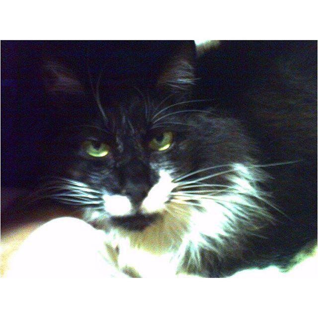 Moco; the cat I love. 愛しのMocoさん。 #digitalharinezumi #toycamera #catstagram #cat #blackandwhite #デジタルハリネズミ #トイカメラ #猫 #ねこ部 #愛猫 #長毛種