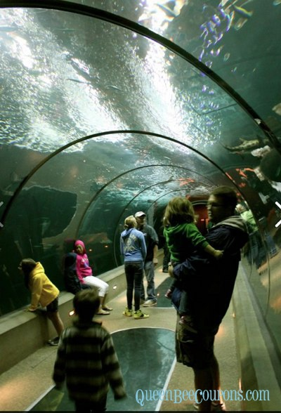 Travel Nw Our Trip To The Oregon Coast Aquarium Free
