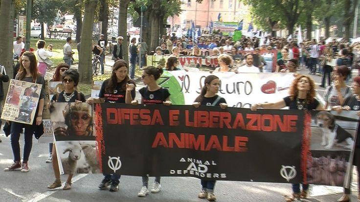 Diverse centinaia di animalisti da tutta Italia si sono date appuntamento oggi pomeriggio a Ferrara per protestare contro la vivisezione, e in particolare contro l'ampliamento dello stabulario dell'Università di Ferrara.