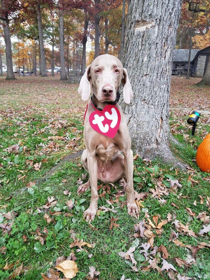 Best 25+ Dog halloween ideas on Pinterest | Dog halloween ...