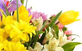 Обои цветы, ирисы, белые хризантемы, тюльпаны, белый фон