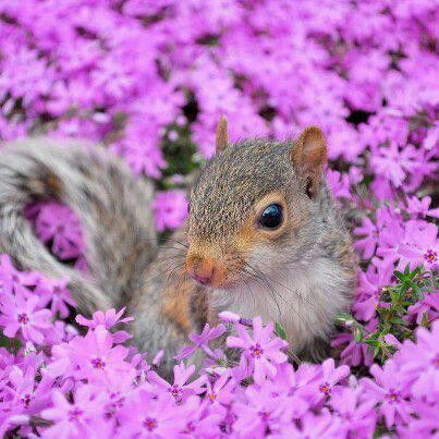 People here are colorful and bright, The flowers often bloom at night! #Squirrel