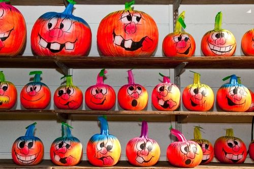 pumpkin faces pictures | Willow Run Nursery & Garden Center | Gallery - Cresskill, NJ