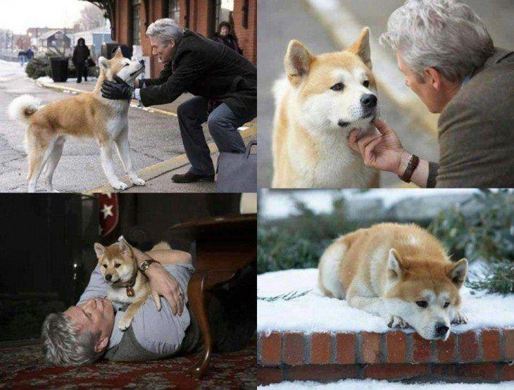 Los 15 Momentos Más Emotivos En La Historia Del Cine Perro Hachiko Siempre A Tu Lado Hachiko Hachiko A Dog S Story