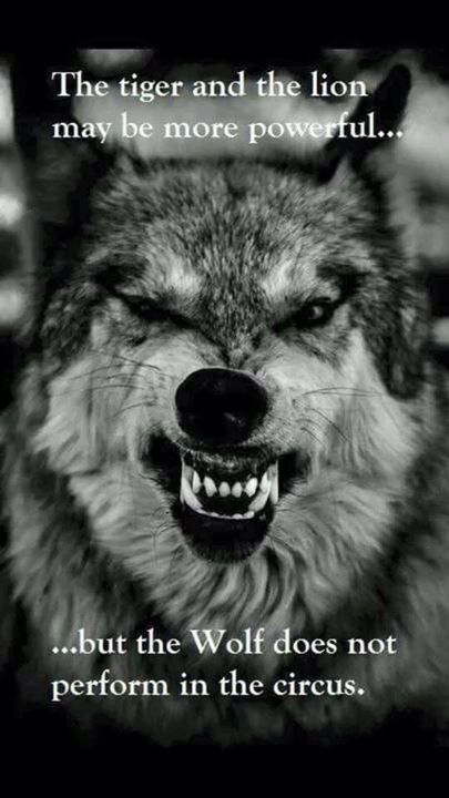 Be the wolf.
