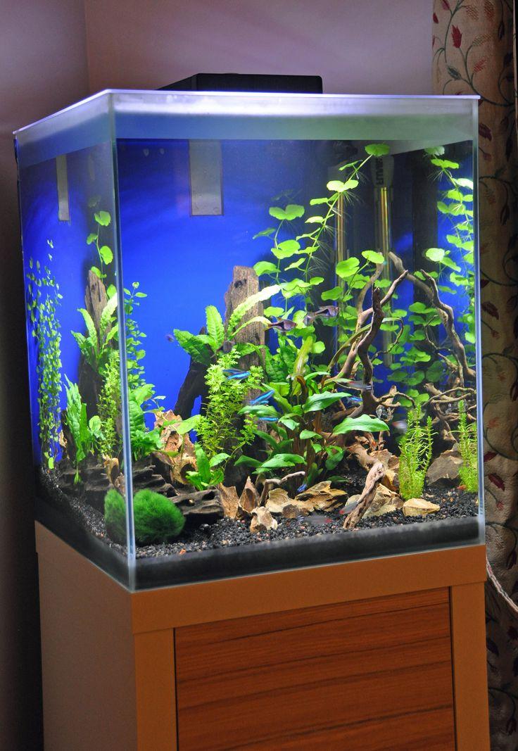 25 best ideas about plante aquarium eau douce on. Black Bedroom Furniture Sets. Home Design Ideas