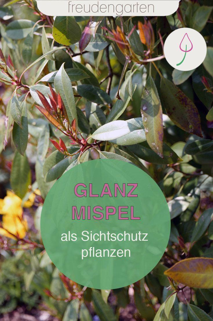 Pin auf Garten Inspirationen und Tipps für Deinen Garten