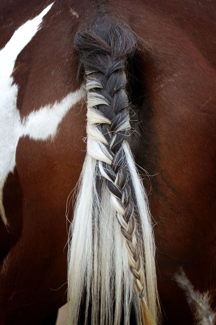 horse tail hair style gracie braided and ready for a jumping show lost creek 5028 | 3b0675d34be863b41b67f803969bba12 tail braids riding lessons