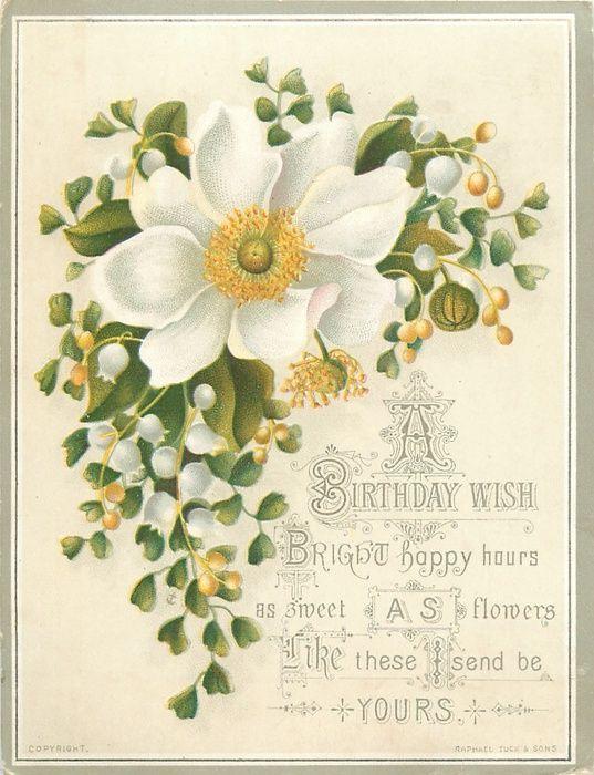 Birthday wishes - white flower