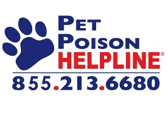 What to do if a pet is poisoned. 4 steps may save their life.  Pet Poison Helpline (855-213-6680)