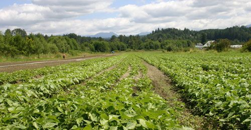 Organic Agriculture More Profitable to Farmers | Washington State University