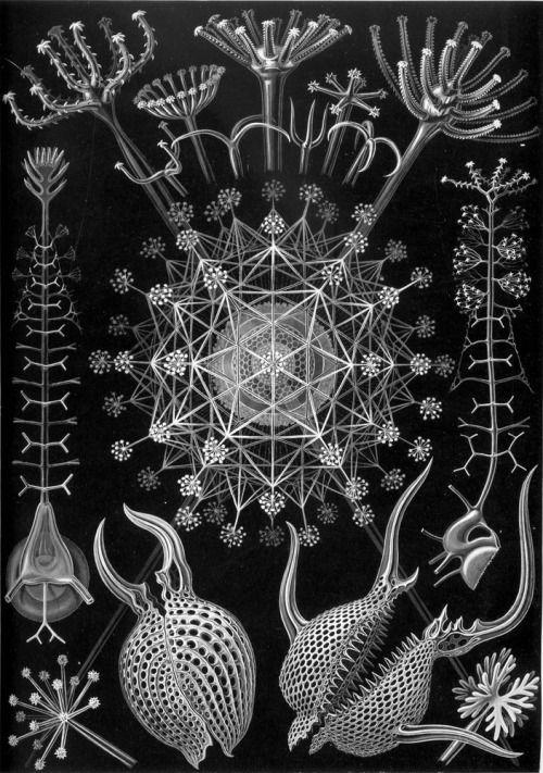 Ernst Haeckel (1834 -1919), German Artist, Philosopher, Scientist.