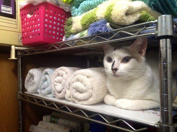 タオル取ろうとして、一瞬ぶったまげた。
