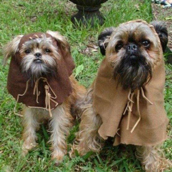 Ewok puppies.