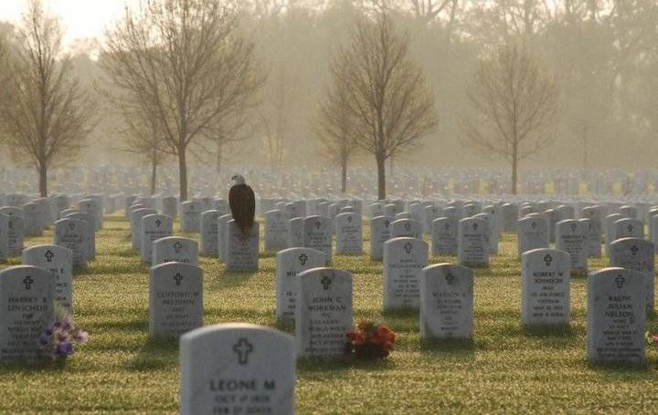 Bald Eagle in Veteran's CemetaryThe National, Soldiers, Heroes, Veterans Day, The Eagles, Memories 11/9, Bald Eagles, Memories Day, Us Military