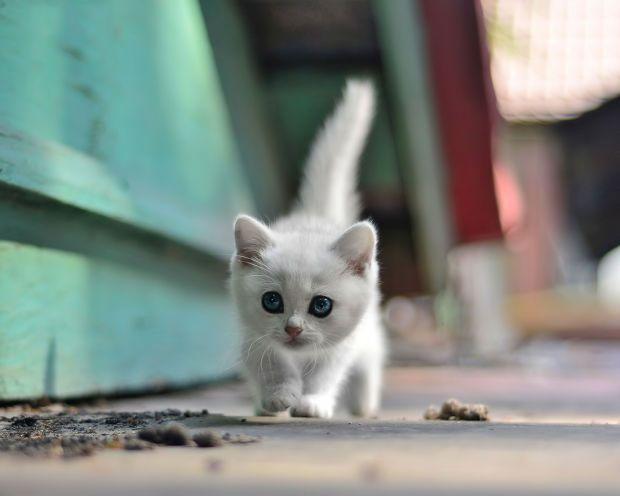 Cute Kitten By Darian