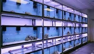 Aquarium Shop Explained