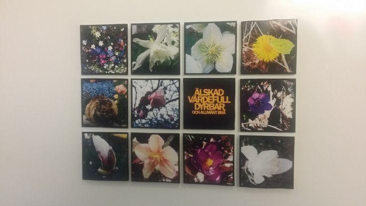 Kylskåpsmagneter med fotografier på blommor | Livserfarenhet