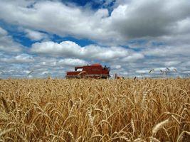 AGROLINK - O Portal do conteúdo Agropecuário. Confira: Noticias atualizadas, Previsão do tempo, cotações, sistemas especialistas de produtos agro, Colunistas, Classificados gerais.