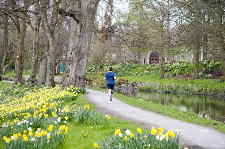 Free Stock Photo: Man running along a pathway in Bute Park, Cardiff, Wales passing a woodland with blooming yellow spring daffodils on one side and a tranquil pond on the other - By freeimageslive contributor: photoeverywhere