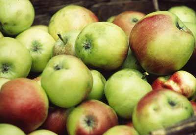 Elma sirkesi - Buğday Ekolojik Yaşam Kapısı