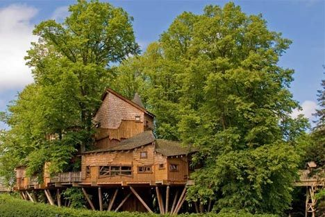 Treehouse Condo'sHouse Design, Cozy House, Trees Forts, Tree Houses, Architecture Interiors, Amazing Trees, Gardens Trees, Trees House, Alnwick Gardens