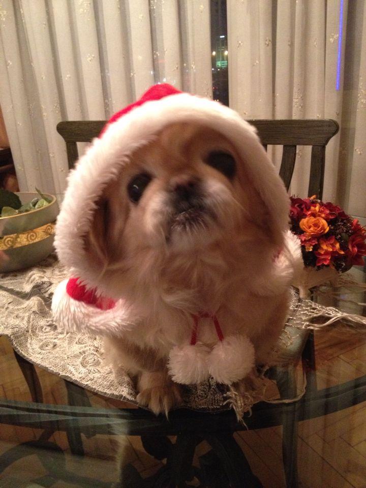 PATİ Noel nunusu