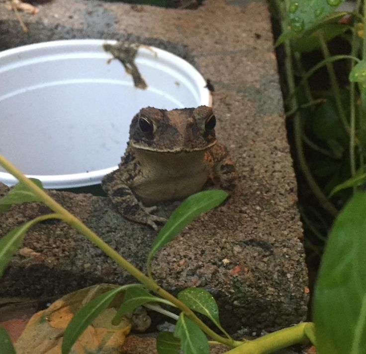 """Not your usual """"cute"""" but I think Maurice the Toad that lives in my garden is super adorable."""