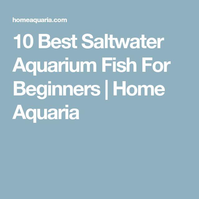 Best 25 saltwater aquarium fish ideas on pinterest for Best saltwater fish for beginners