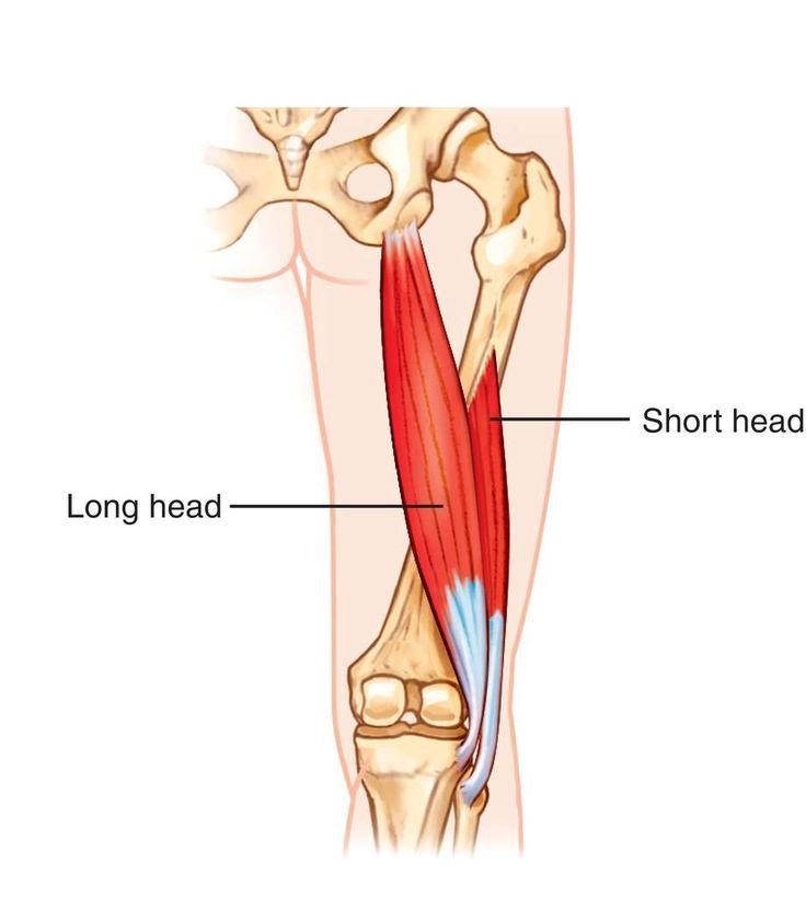 33 besten Leg anatomy Bilder auf Pinterest | Menschliche anatomie ...