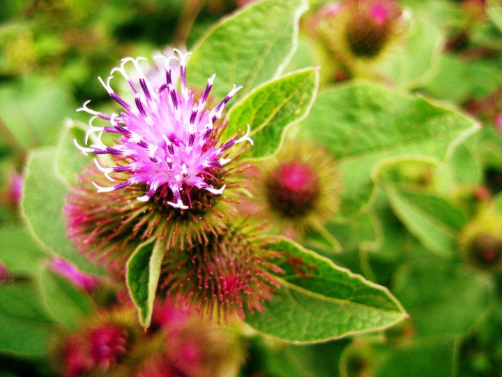 Macro thistle, what a great contrast of natures vibrant colours.