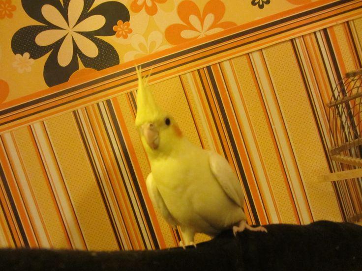 А это наша Коржуля, самая умная птица. Её больше нет. Пожар забрал питомцев, попугайку и крольчонка Васю. Кошки и котята разбежались.  Биткоин/кошелек BitcoinWallet 13FDFJKG1yeRaWZbYj7ewrNiiD1G77bW8U