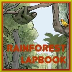 Rainforest Lapbook