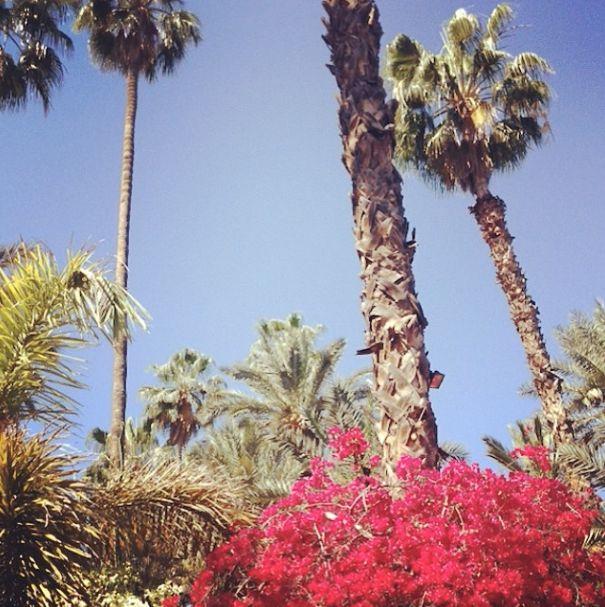 The Jardin Majorelle in #marrakech. #flowers #sky #blue #pink #travel #holidays