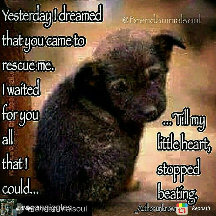 THIS SAYS IT ALL VOLUNTEER, FOSTER,ADOPT, DONATE OR JUST SHARE A PROFILE PLEASE DO SOMETHING TO HELP A UNLOVED OR UNWANTED ANIMAL . THEY NEED ALL THE HELP WE CAN GIVE THEM