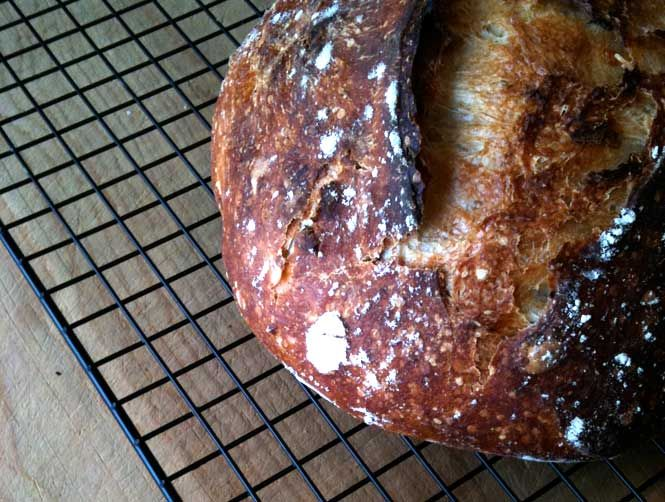 No knead rosemary bread | cooked | Pinterest