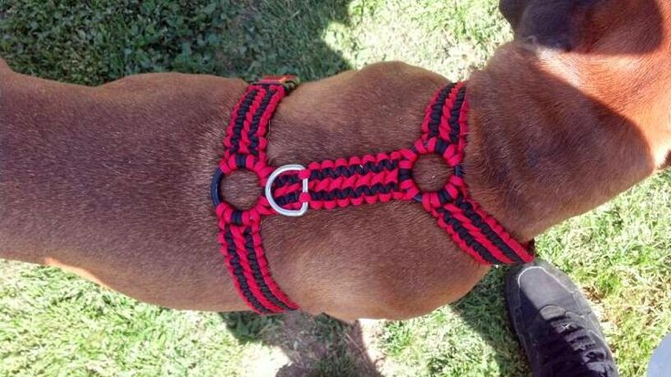 The Paracord Blog: Paracord: A Dog's Best Friend